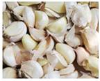 03_Vega-ST-Garlic
